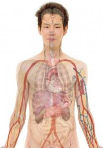anatomy-254129_1280