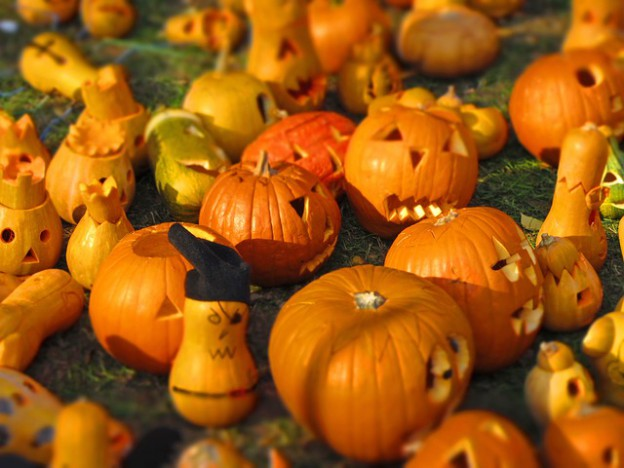 pumpkin-562409_640