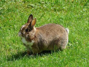 rabbit-995045_640