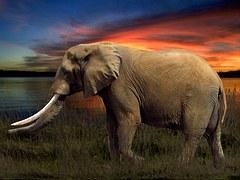 elephant-1693281__180