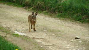 hare-177666_1280
