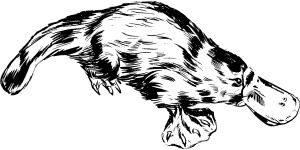 platypus-153496_1280
