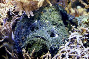stone-fish-1295032_1280